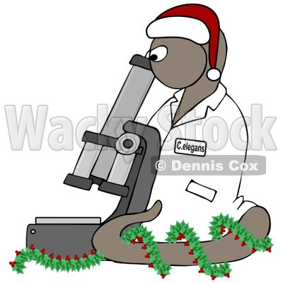 Clipart BrownChristmas C Elegans Roundworm With A Santa Hat And Holly Wreath And Microscope - Royalty Free Illustration  © djart #1082253