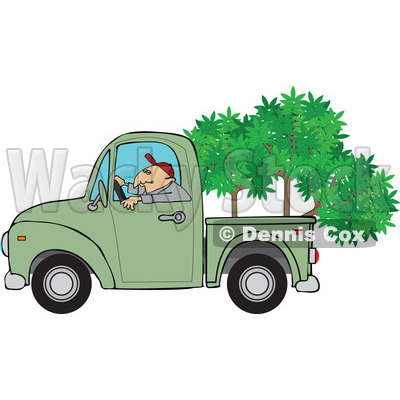Cartoon Of A Man Driving A Pickup Truck With Trees In The Bed - Royalty Free Vector Clipart © djart #1127746