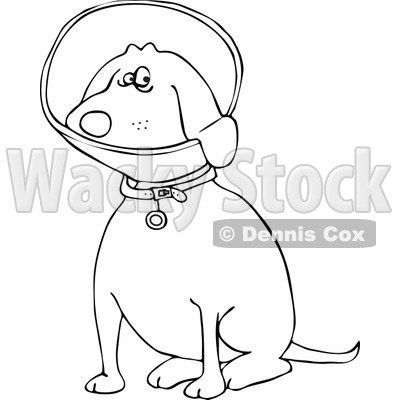 Clipart of an Outlined Sitting Dog Wearing an Elizabethan Colar Cone - Royalty Free Vector Illustration © djart #1219038