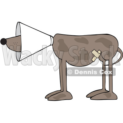 Cartoon Injured Brown Dog Wearing a Cone © djart #1625607