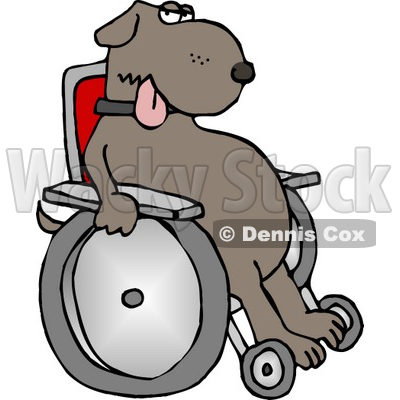 Injured Dog Sitting In a Wheelchair Clipart © Dennis Cox #4356