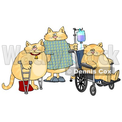 Three Orange Cats With IV Dispensers, Crutches, Casts and ...