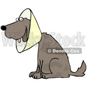 Clipart Illustration of a Brown Dog Wearing An Elizabethan Collar While Recovering © Dennis Cox #36997