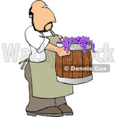Man Harvesting Wine Grapes Clipart © Dennis Cox #5231