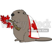Canadian Beaver Holding Maple Tree Branch and Wearing Canada Flag Clipart Illustration © Dennis Cox #5666